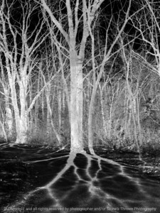 015-tree_shadows-wdsm-05mar09-09x12-201-300-bw-1384