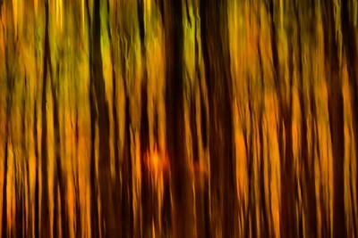 October Forest #1