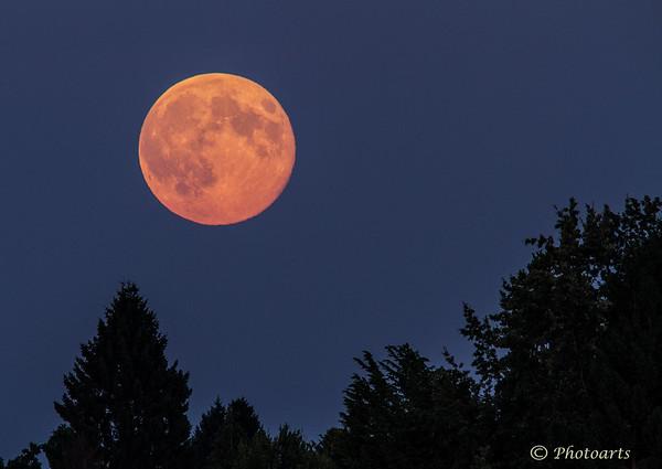 """""""Full Moon Fever"""""""