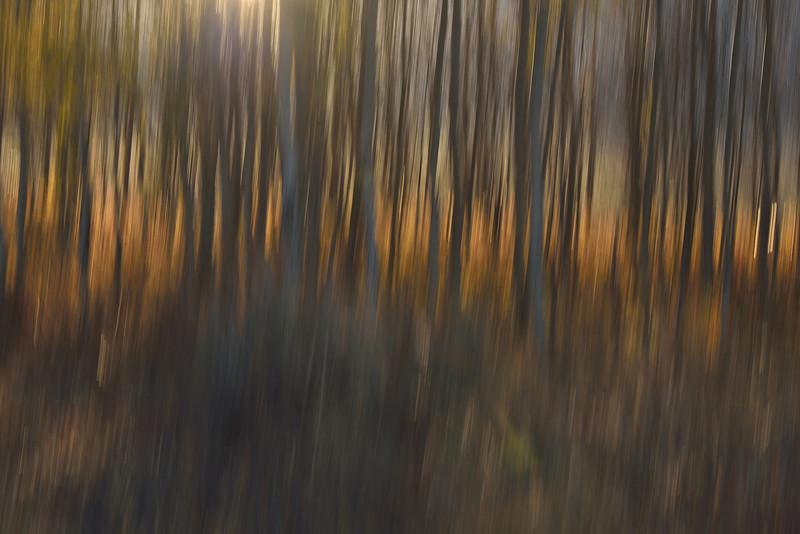 Aspen Abstract No. 1