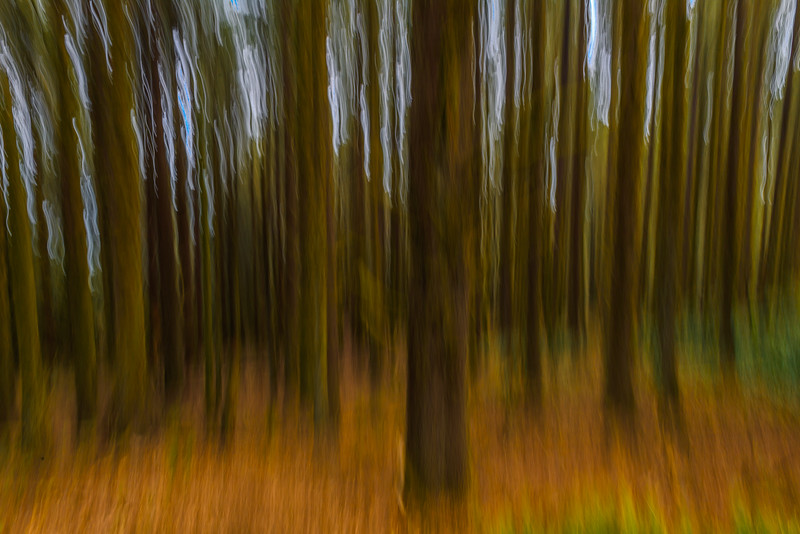 Forest Abstract, Oregon