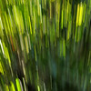 Everglades Abstract