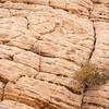 Desert plants grow in sandstone fissures, Grand Staircase-Escalante National Monument, Utah.