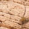 Desert plants grow in sandstone fissures, Grand Staircase-Escalante National Monument, Utah.