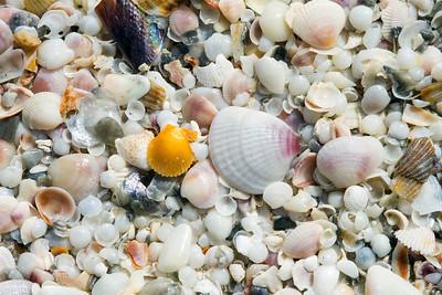 shells_1287