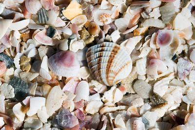 shells_1370