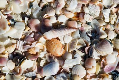 shells_ps