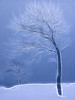 image-14-tree