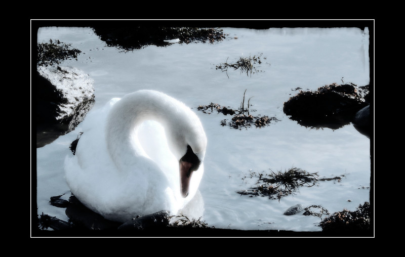 IMG_8640-frame