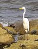 image-egret