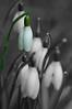 DSC_0043b-1_edited-1-blurb_edited-3