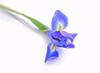 image-iris-card