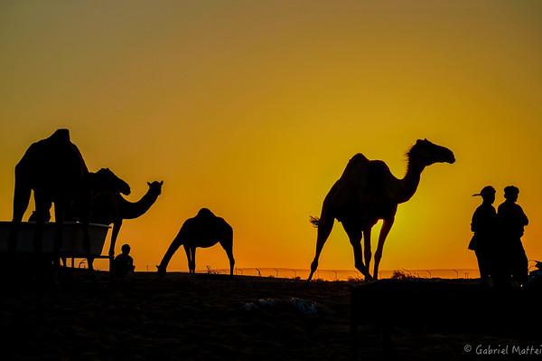 Abu-Dhabi Life