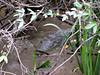 croc in mud