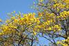 flowers guanacaste