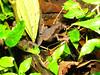 leaf litter forg 2