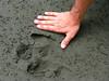 Costa Rica 2010 Corcovado Taiper tracks (2)