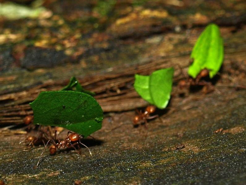 leaf cutters