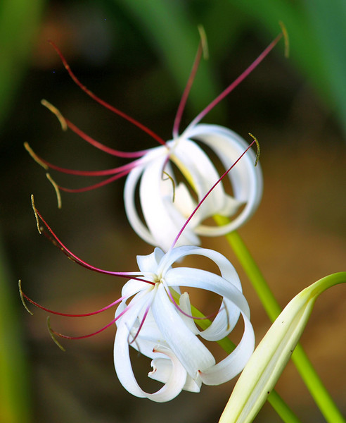 cool flowers