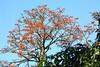 flowers monteverde rd