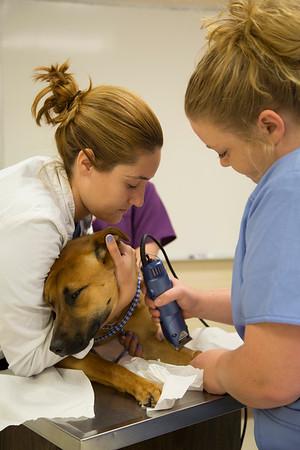 Veterinary Tech