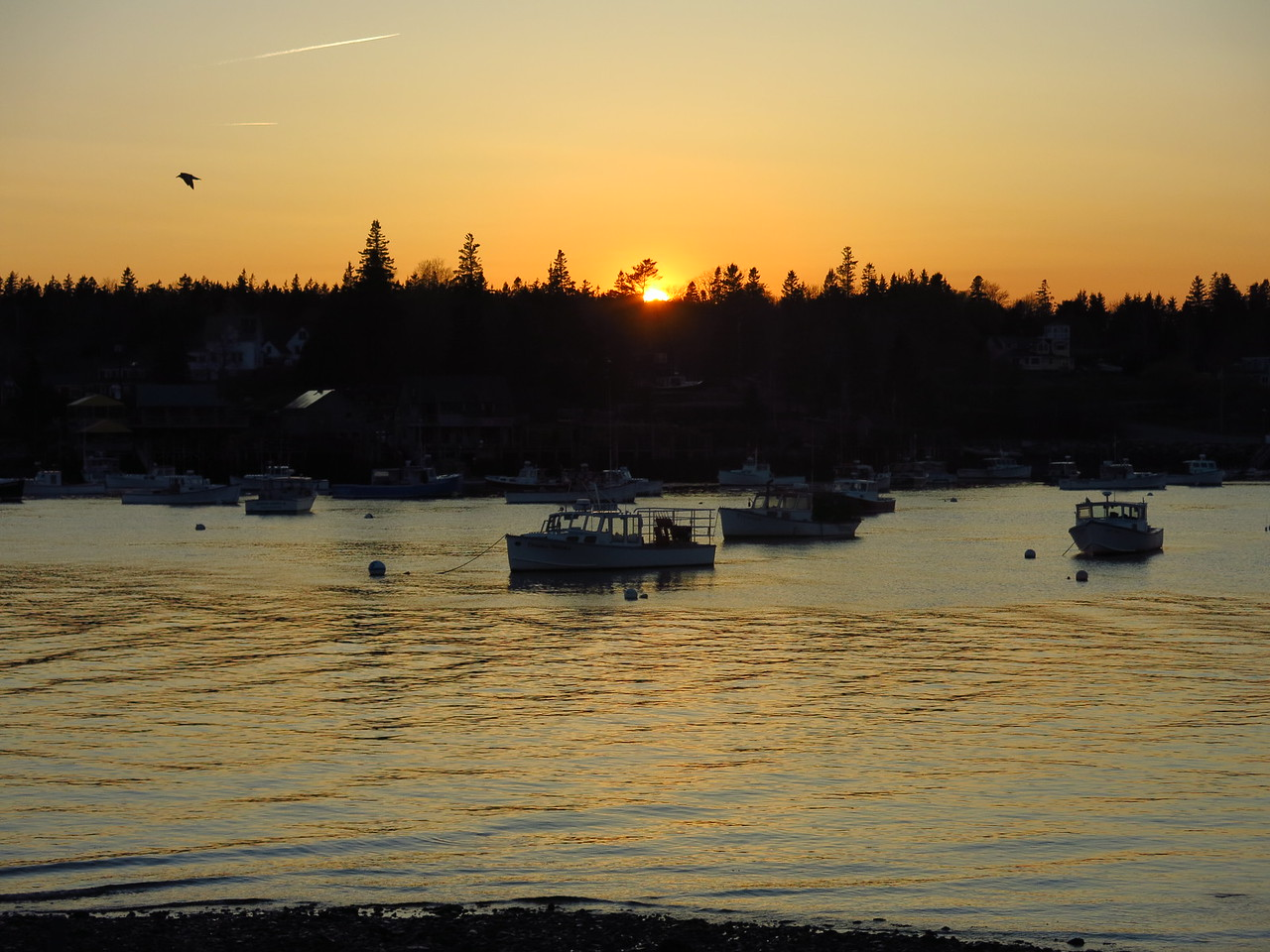 2016-05-11 Acadia (277)