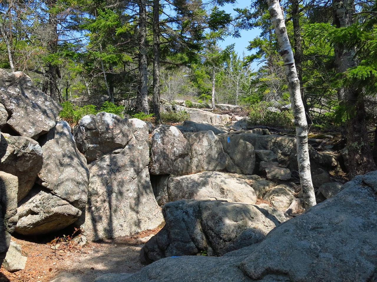 2016-05-12 Acadia (12)