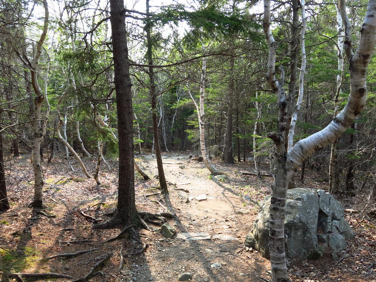 2016-05-12 Acadia (136)