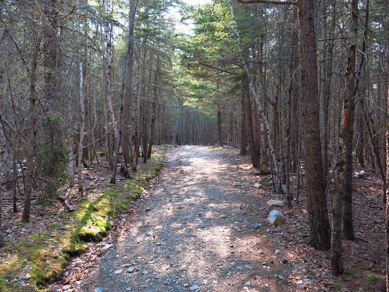 2016-05-12 Acadia (153)