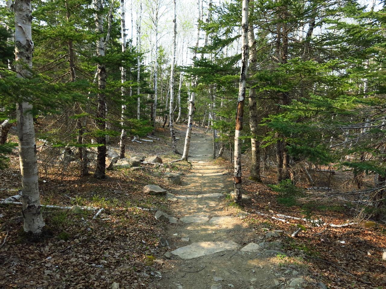 2016-05-12 Acadia (142)