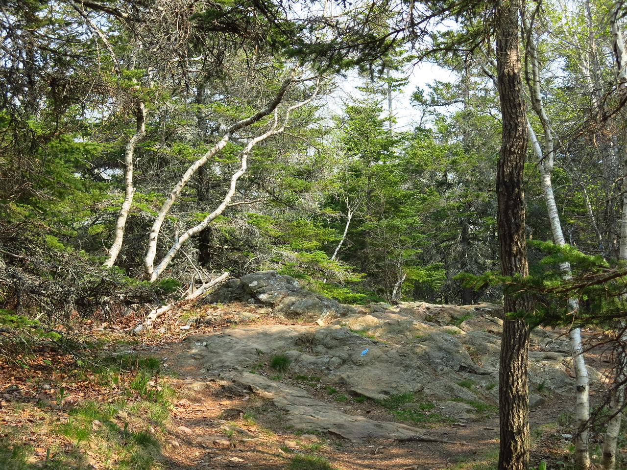2016-05-12 Acadia (116)