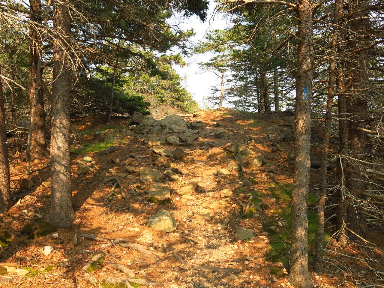2016-05-12 Acadia (129)