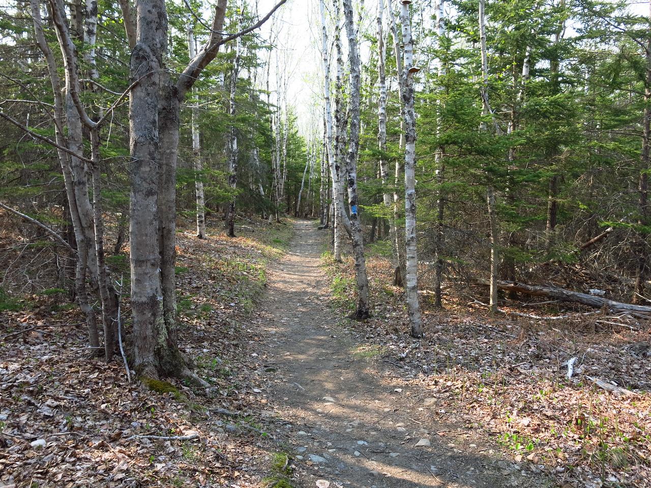 2016-05-12 Acadia (140)