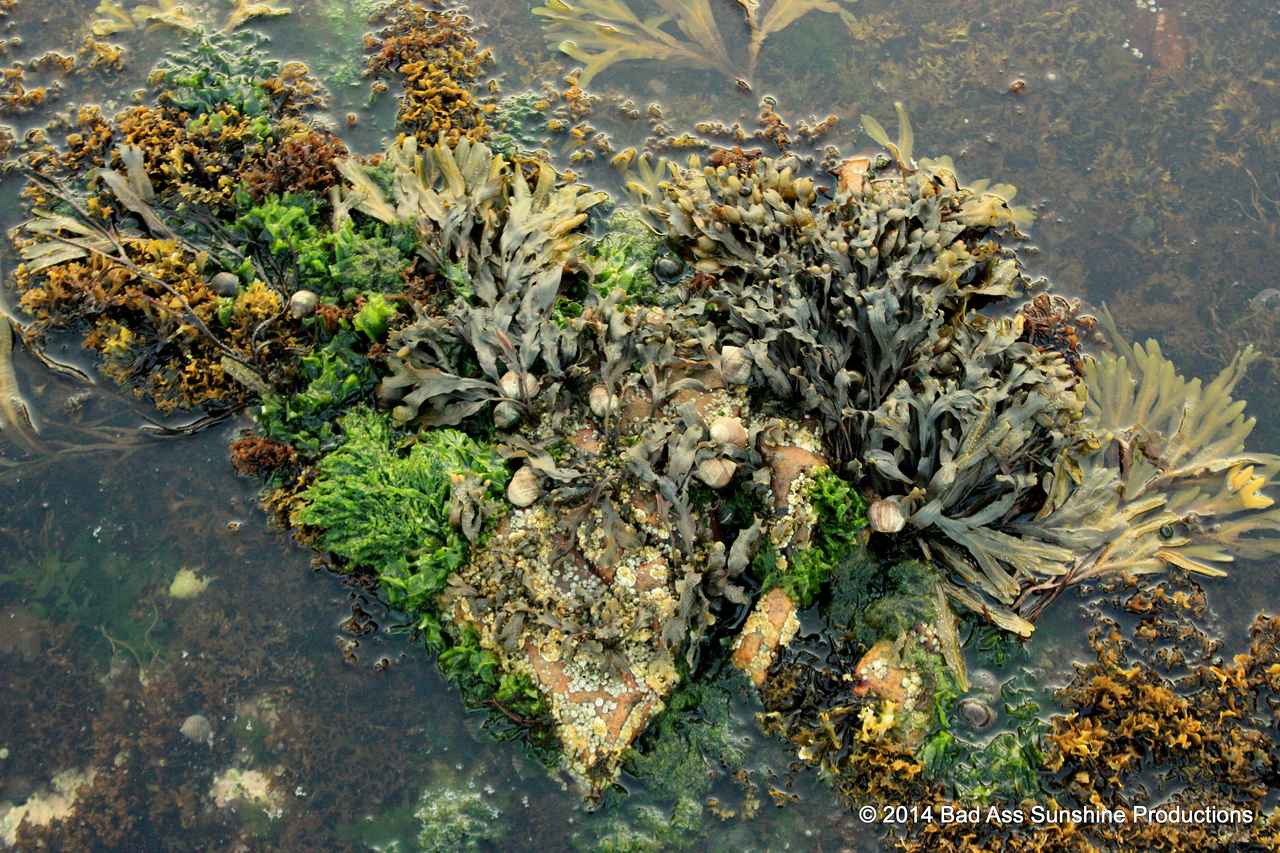 The Seaweed Queen 2