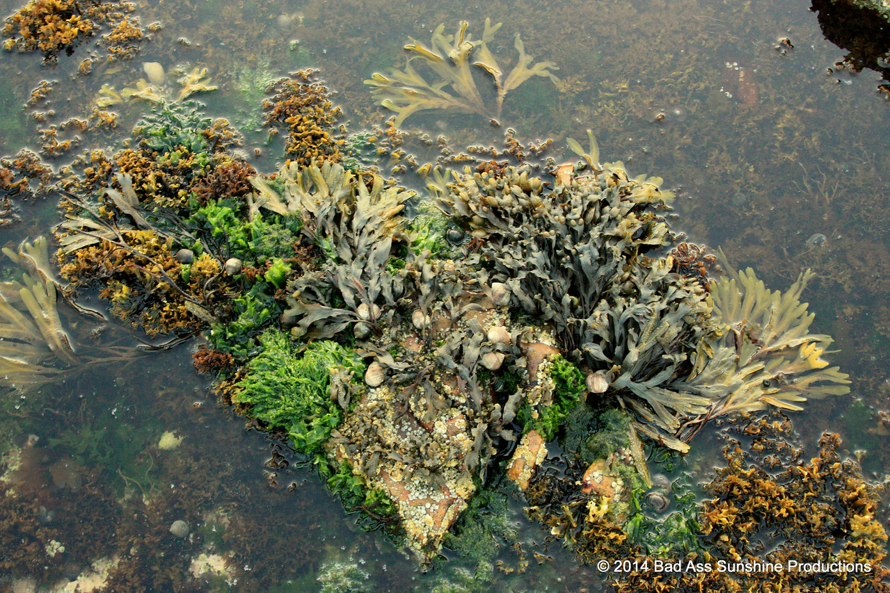 The Seaweed Queen 1
