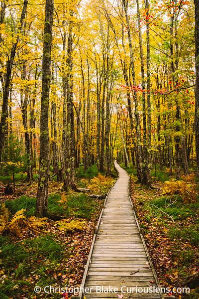 Jesup Path Autumn