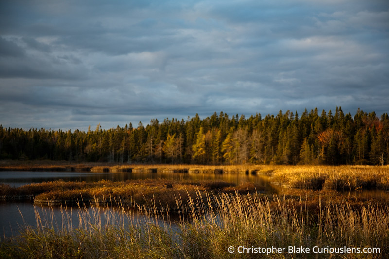 Later afternoon salt marsh - Acadia NP