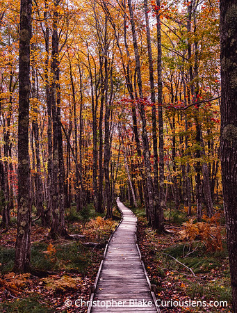Boardwalk and Color - Acadia