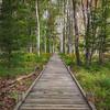 Jesup Trail Boardwalk