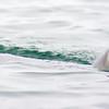Acadia Seal