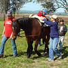 EQUINE FACILITATED THERAPY