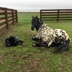 Photo taken by Randie Boardman on the day he was foaled, January 15, 2018.