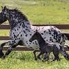 STONEWALL SANTIAGO - Colt foaled April 5, 2019