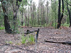 Old Rosea Campground - now permanently shut for revegetation
