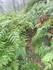 Site inspection visit Nov 2011 Overgrown bracken on climbers track