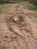 Pharos Gully tourist track erosion