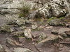 Bushrangers Bluff erosion at base of cliffs