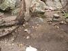 Bushrangers Bluff erosion exposing tree roots.