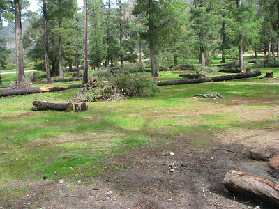 Native pines replanting at 'The Pines'Campground Araps