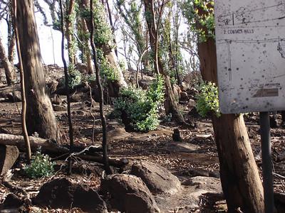 Red Rocks/Ben Nevis Bushfire damage